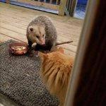 猫が外で餌を食べていた結果?ネズミに奪われた!