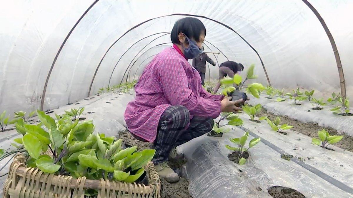 #CoronavirusOutbreak How have Chinese farmers undertaken spring planting amid epidemic?
