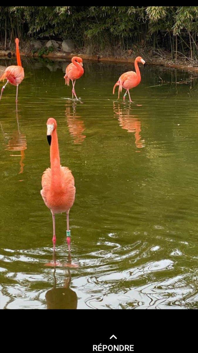 La beauté naturelle et le tourisme.  Protégeons l'environnement et exploitons les richesses naturelles.  Un défi à relevé dans l'île par la fondation Wilrick Aldéus. pic.twitter.com/mZLa50hZWX