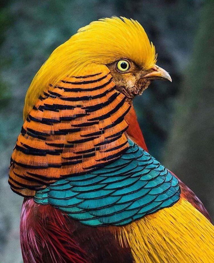 #birdwatching pic.twitter.com/g7FsQLwWZZ
