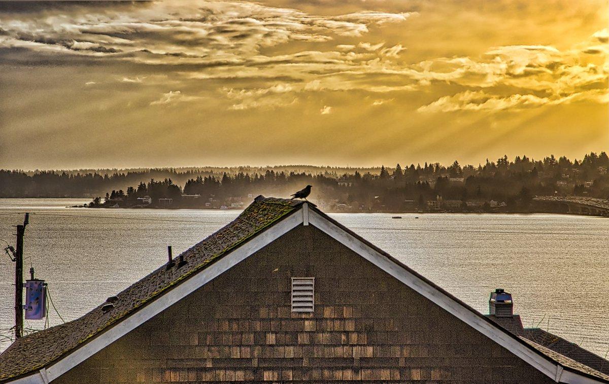 Inspiration is everywhere.   #sunrise #Seattle #birdwatching #clouds #lightpic.twitter.com/Mqfa4FweL1