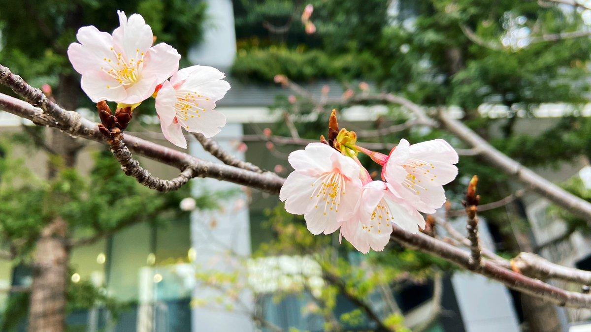 Japanese spring..*・゚ .゚・*.  Pretty and beautiful  #写真好きな人と繋がりたい #Japan #Japantrip #Japanesepic.twitter.com/bLHfUfrMpN