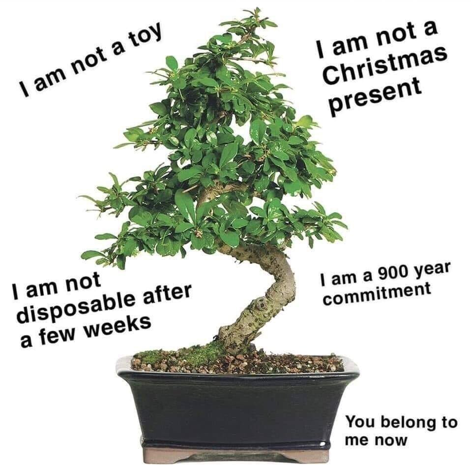 O Xrhsths Fujiko Slow Sto Twitter Imagine Yoongi Giving Namjoon A Bonsai Tree As A Christmas Present Which The Younger Aptly Named Nine Little Did They Know Nine Is A Sentient Bonsai
