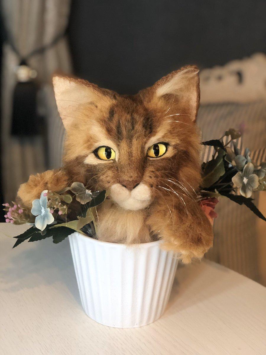 先日、愛猫ちゃんが亡くなりました。生前はたくさんの方からの励ましのお言葉ありがとうございました!今日、葬儀法要から帰宅すると2ちゃんメンバーからお届け物が!!思わず、抱きしめて泣いてしまいました。こんな細かい毛色の違いまで繊細に作ってくださって(இωஇ  )ブワッ…一生の宝物にします!