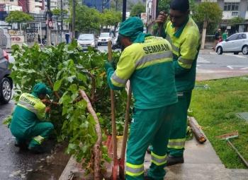 A equipe da Gerência de Áreas Verdes (GAV/Semmam) faz o trabalho contínuo de manejo de árvores exóticas invasoras, bem como espécies mortas, com declínio vegetativo ou com risco de queda.  #árvores #EnseadadoSuá #JardimCamburi #RiscodeQueda #Semmam http://bit.ly/2TddiMCpic.twitter.com/nqhN8ODShZ
