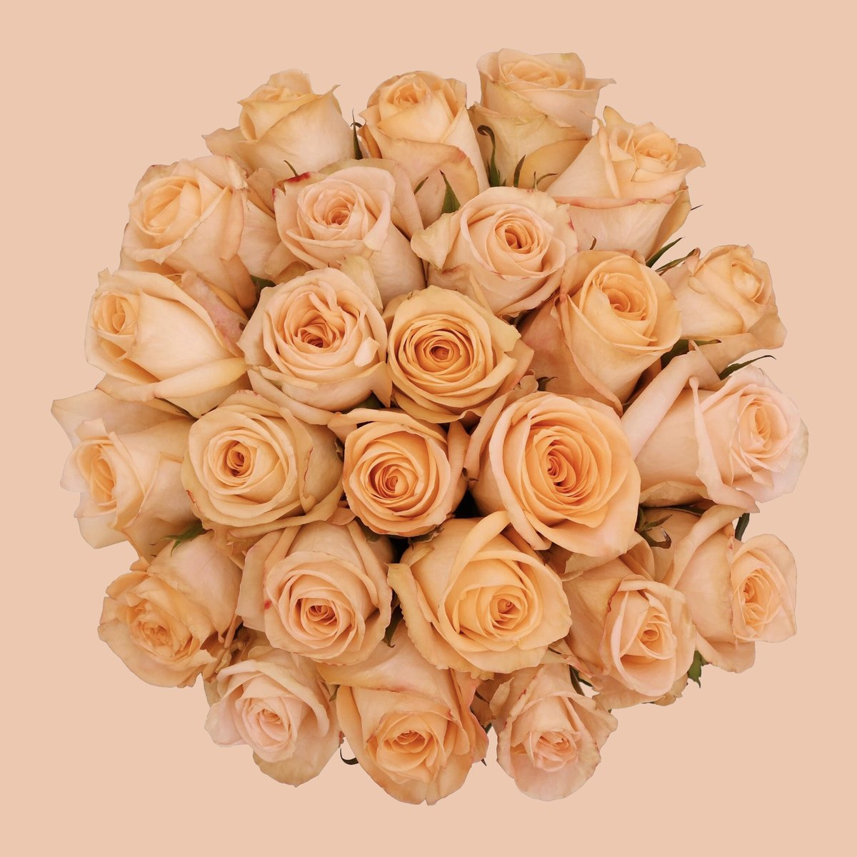 Happy Leap Year! We're celebrating the early end of February with our pretty Tiffany Roses! http://bit.ly/tiffanyroses   #Bloomingmore #leapyear #29days #blooooms #moodforfloral #florallife #florallove #floralphotography #fineartflowers #rosesofinstagram #floweraddictpic.twitter.com/iyO3OohlmJ