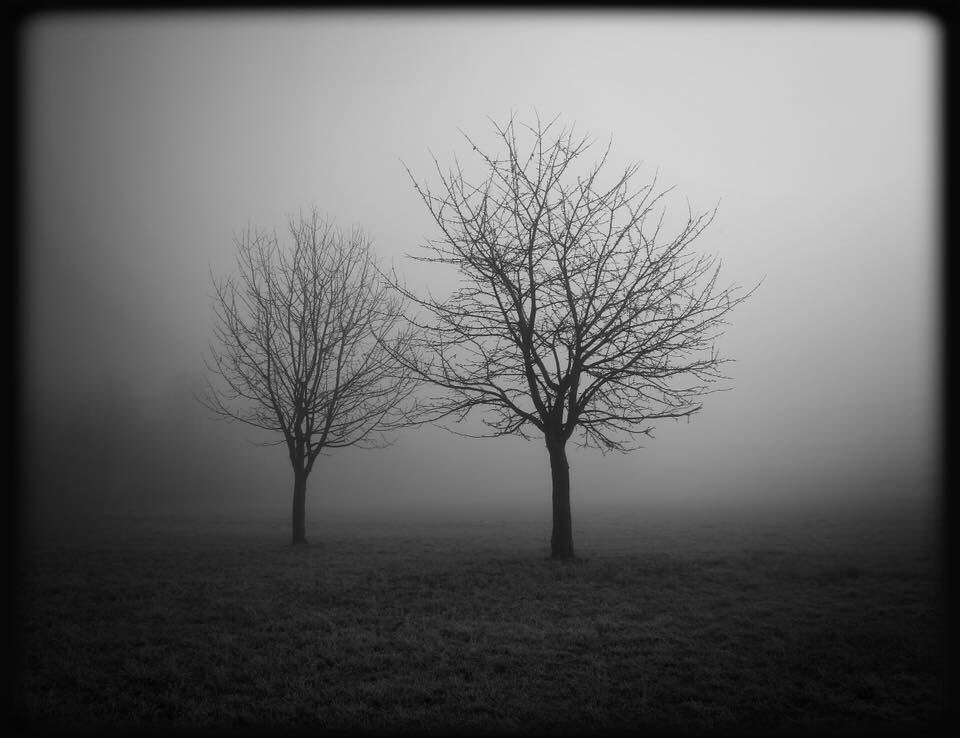 ... silent morning ... #fog #mist #trees #fields #countryside #bw #blackandwhite  #photography #monochrome #nature #outdoors #winter #morning #mood #atmosphere #surreal #dream #mystery #magic #spell #fairytale #darkvibes #symbol #grunge #gothic #ghost #silence #spiritpic.twitter.com/UsMRLF14et