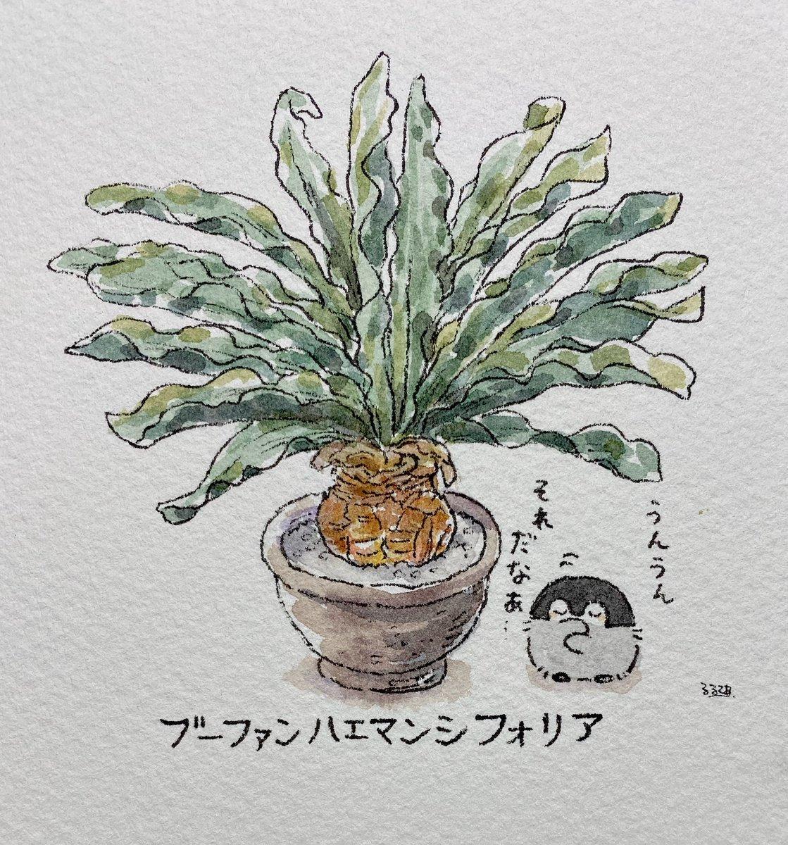 植物とコウペンちゃん