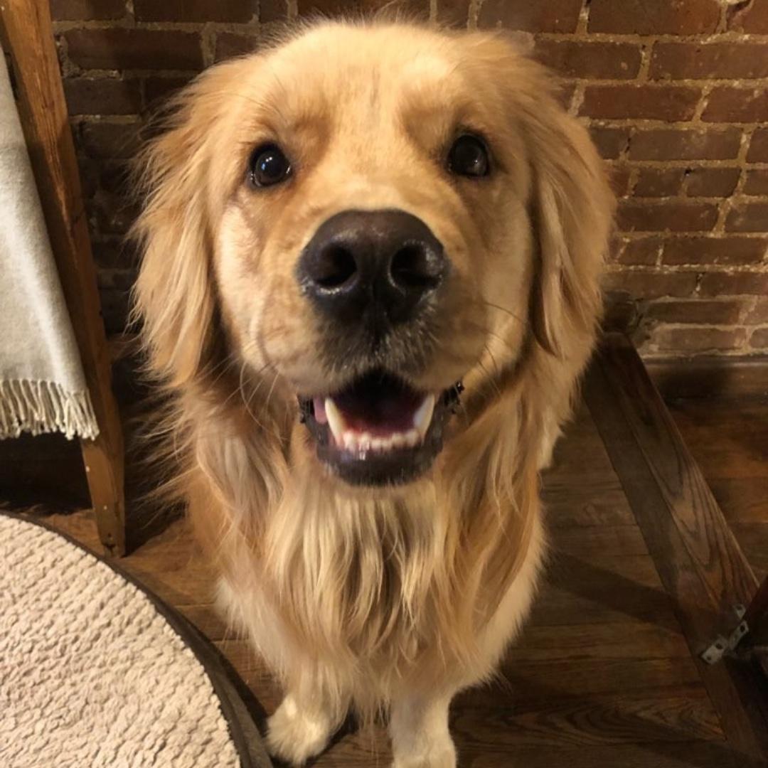 Tucker wishes you a happy end of the day! #goldenretriever #maythepawsbewithyou #lukedogwalker #dogwalkeruws #happydog #uws #doggy #doggo #furbaby #dogcity  #puppy #puppylover #ilovedogs #sweet #whatabeauty #nycitydog #sweetdoggo #endoftheday #cutedog #cutepic #dogsofinstagrampic.twitter.com/aCyVm4A8hS