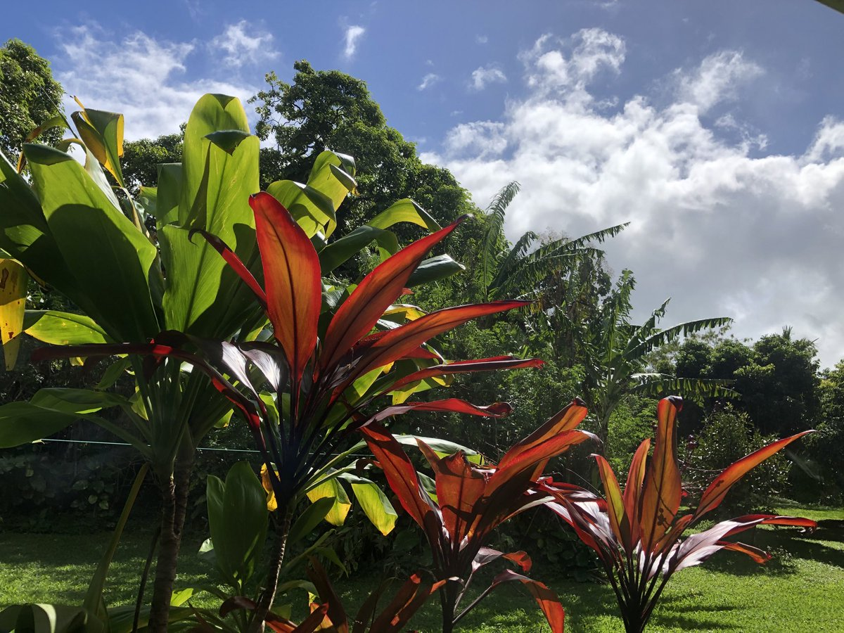 test Twitter Media - Passing clouds in Haiku. #cmweather #Maui #magicalMaui #ConsciousMaui #MauiNokaoi https://t.co/bcQsC05L5L