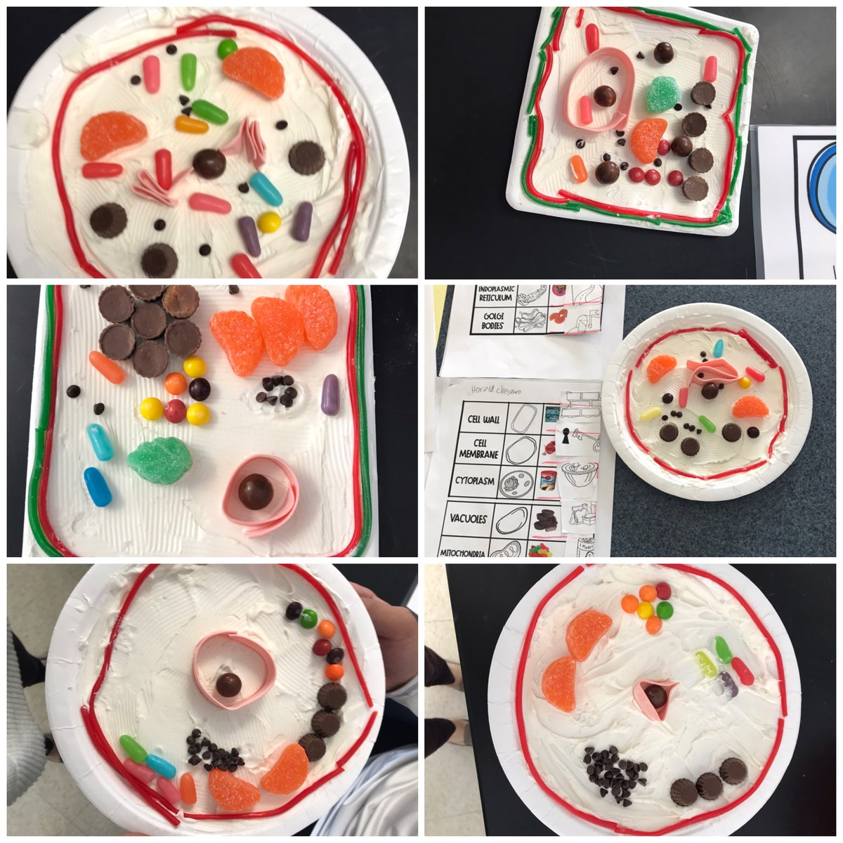 Biology lessons may not always make you hungry, but #moboces science teacher Christine Curtacci led a yummy lesson on cell organelle! Students made a plant or animal cell and using candies to describe each organelle and its function. #handsonlearning #studentengagementpic.twitter.com/aQP8id1pSc