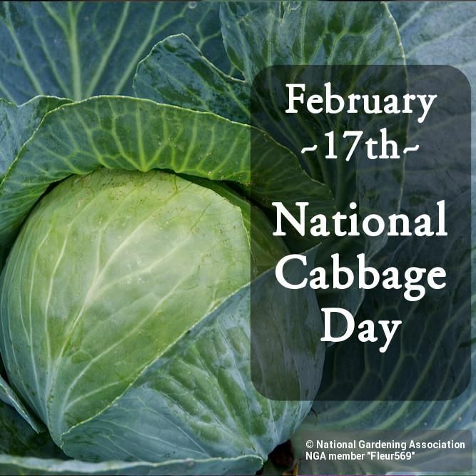 Today is National Cabbage Day! #nationalcabbageday #national #day #cabbage #winter #veggies #nga #growing #grow #gardening - http://Garden.orgpic.twitter.com/su8HmEhFAJ