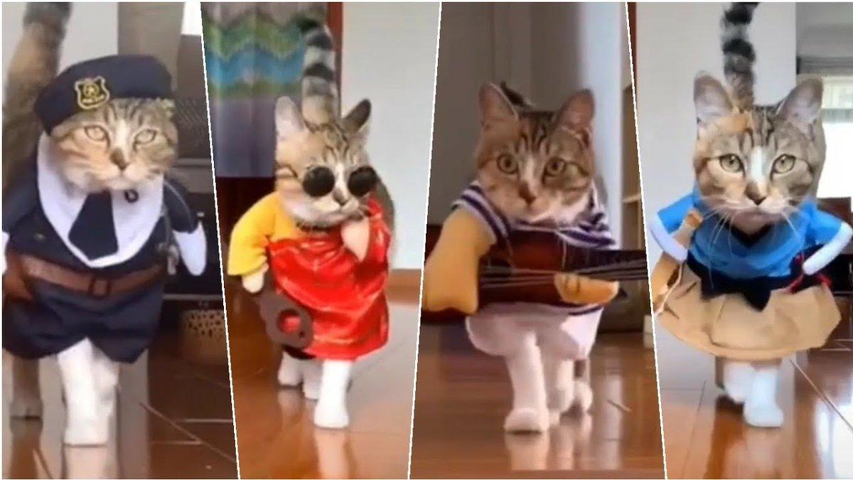 Funny #Cats and Kittens #Meowing ...   #Cats #Cat #Kittens #Kitten #Kitty #Pets #Pet #Meow #Moe #CuteCats #CuteCat #CuteKittens #CuteKitten #MeowMoe   #AwwAnimals #BabyCat #BabyCats #CatBaby #CatCompilation #CatMeowing #CatVideos   https://www.meowmoe.com/581621/funny-cats-and-kittens-meowing-compilation-baby-cats-cute-and-funny-cat-videos-compilation/…   .