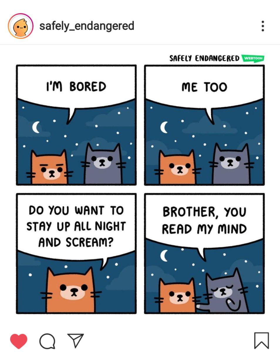 This is #Truth   #Cats #Cat #Kittens #Kitten #Kitty #Pets #Pet #Meow #Moe #CuteCats #CuteCat #CuteKittens #CuteKitten #MeowMoe  https://www.meowmoe.com/581625/this-is-truth/…   .