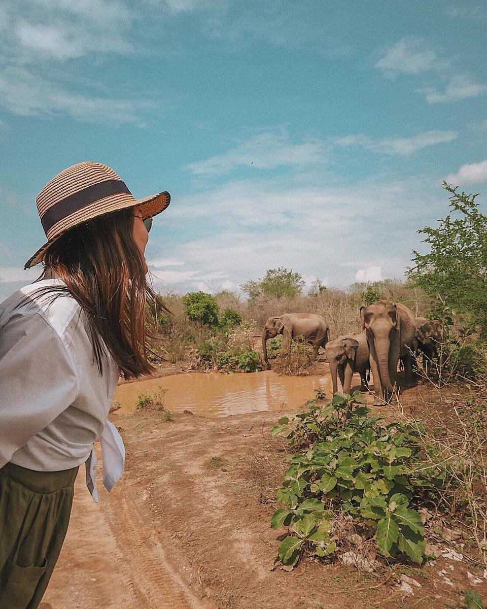 http://www.imperialyalasafari.com welcome to srilanka most popular safari destination  #TBT #PINK #studyabroad  #places #exploring #travelgram #wanderlust #instatravel #escape #backpacking #likeforfollow  #fallowtrick #travelgram #picoftheday #yala #ella #unawatuna #koggala #galle #mirissa