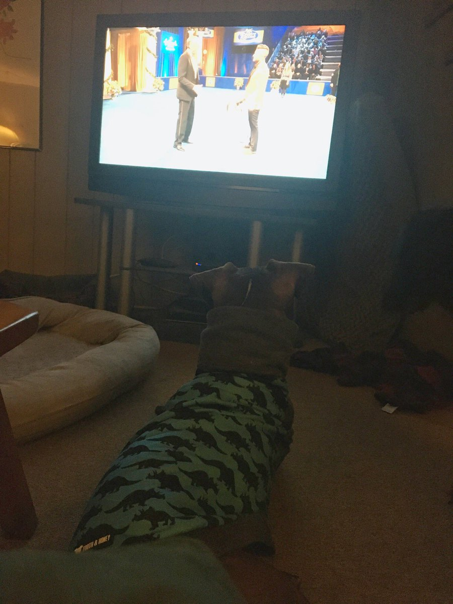 Perry & Britta love watching the #NationalRescueDogShow! #BestInRescue #PitBull @PittieLovePeace #LancasterPa #PitBullMix #BullyBreed @ToothandHoney #RescueDogpic.twitter.com/Fdvi641UgX