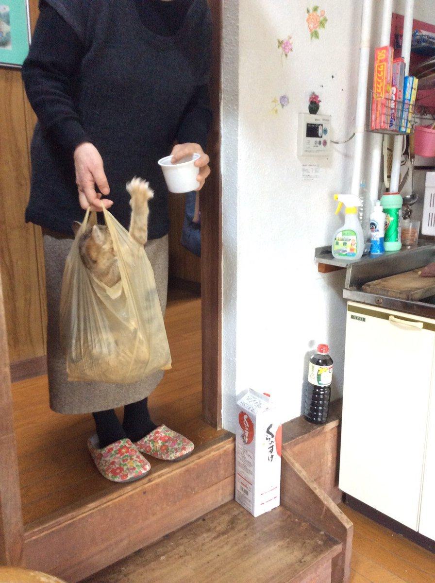 猫をコンビニの袋に入れて運ぶオカーン