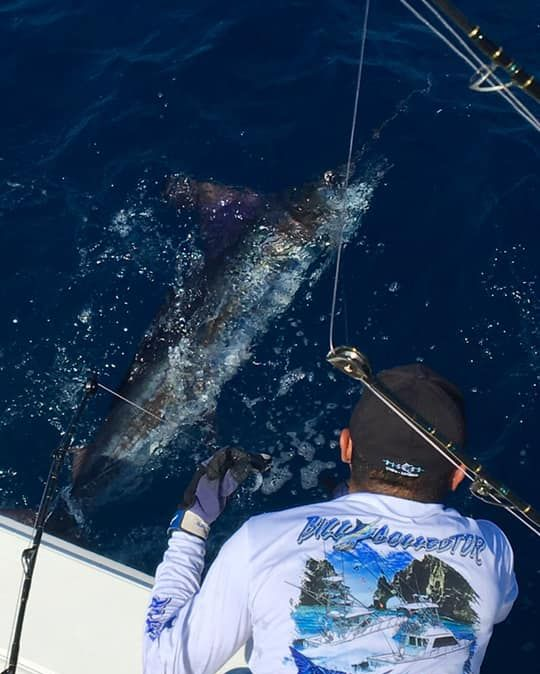 Cabo, MX - Bill Collector 2 went 4-6 on Striped Marlin.