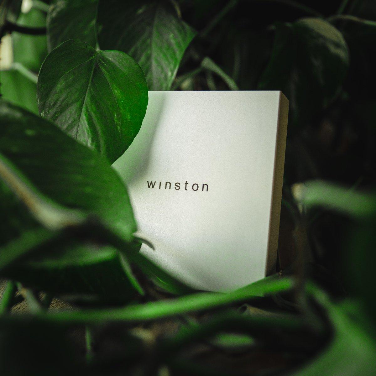 Winston uses state-of-the-art technology that protects your privacy on any device at home!  Get Winston now with up to 54% OFF http://bit.ly/WINSTON_indiegogo… #cyber #cyberpunk #cybermonday #cybercorner #cybersecurity #cyberpunkart #cyberwar #data #datascience #datacenter #databendingpic.twitter.com/PN0tMOwUW6