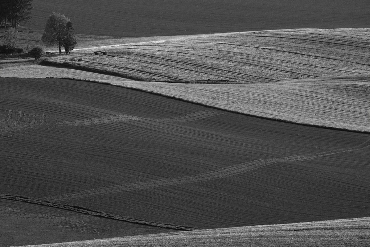 no meadow  #фотография #photography #blackandwhitephotography