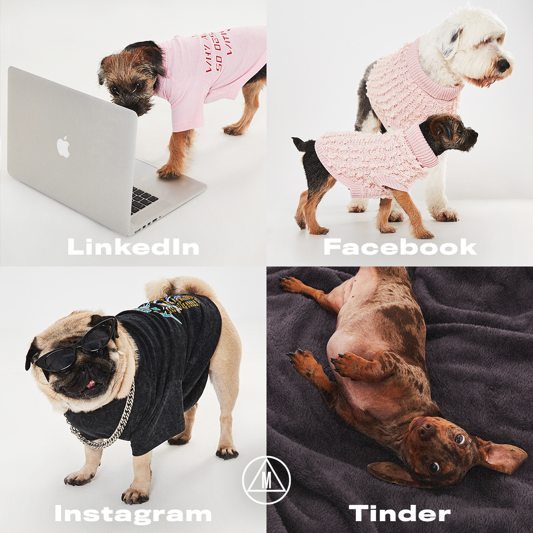 The Dogs of Missguided 🐶💕 You asked, we listened 📣 We've just added loads more dog jumpers + tees ⚡️Shop them on site now before they're gone http://bit.ly/37INR9K  ⚡️#dogsofmissguided
