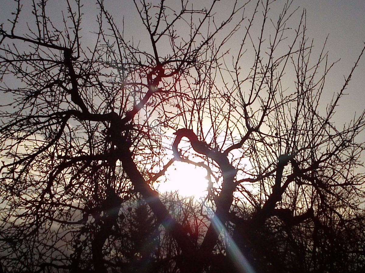 Don't let others hold you back #art #nature #ThePhotoHour #photos #photography #sonne #sun #bäume #trees #spring #winter #sky