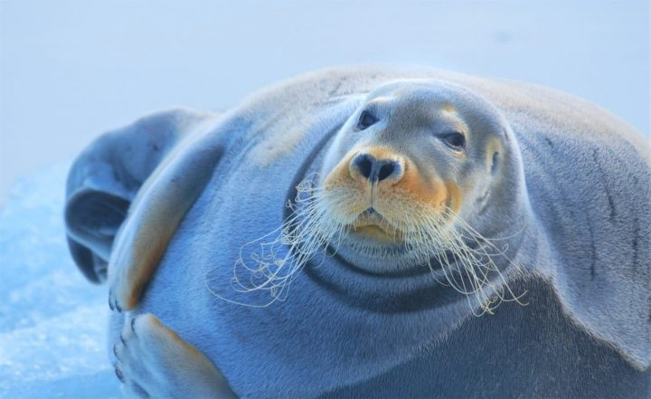 https://www.koelner-newsjournal.de/spitzbergen-auf-expedition-in-der-arktis-filmemacher-kommen-nach-koeln-um-ihre-einzigartige-produktion-persoenlich-vorzustellen/… #Kinotipp #kinoztwitterem  #Arktis #Spitzbergen #silkeschranz #christianwuestenberg @_cinenovapic.twitter.com/uJFtYXTeEL