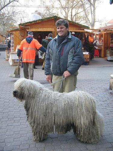 #dog #dogs #doggo #dailydogpic #dailydog #dogbot #bot #dailydogbot #doge #doges #doggos #dogepic #dogepics