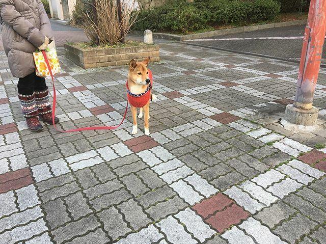 なんか面白いことないかなーと、寒空に立ち尽くすココちゃん こう寒いとワン友に会わないねえ。 #犬  #雑種犬  #dog  #犬のいる暮らし