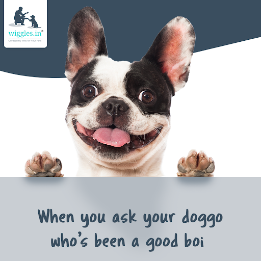 A little goofy and woofy, he is your cutie. Make that cute smile wider with some compliments! #WigglesIndia #VetonCall #WigglesBox #GroomingService #PartnersInPethood #Mumbai #Pune #puppy #cute  #dog #cat #pet #pethealth #goodboi #compliment #smile #love #woof #best
