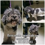 Image for the Tweet beginning: 🐕🆘🇲🇽 #Encontrado #PerroPerdidoCDMX #GAM en