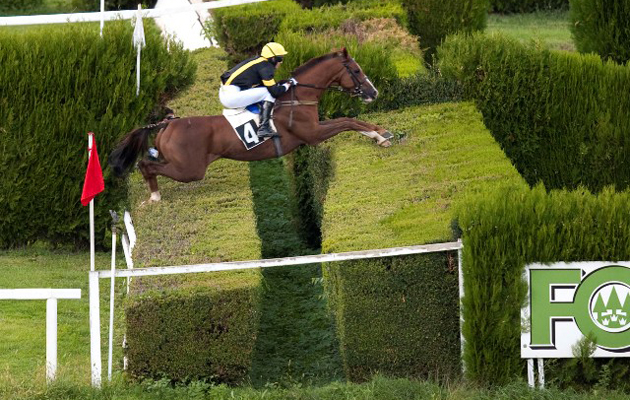 The amazing double hedge at Merano Racecourse, Italy