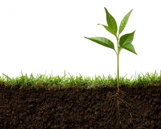 🌿 Atos has launched #SPRING to drive customer centricity and growth across the Group....