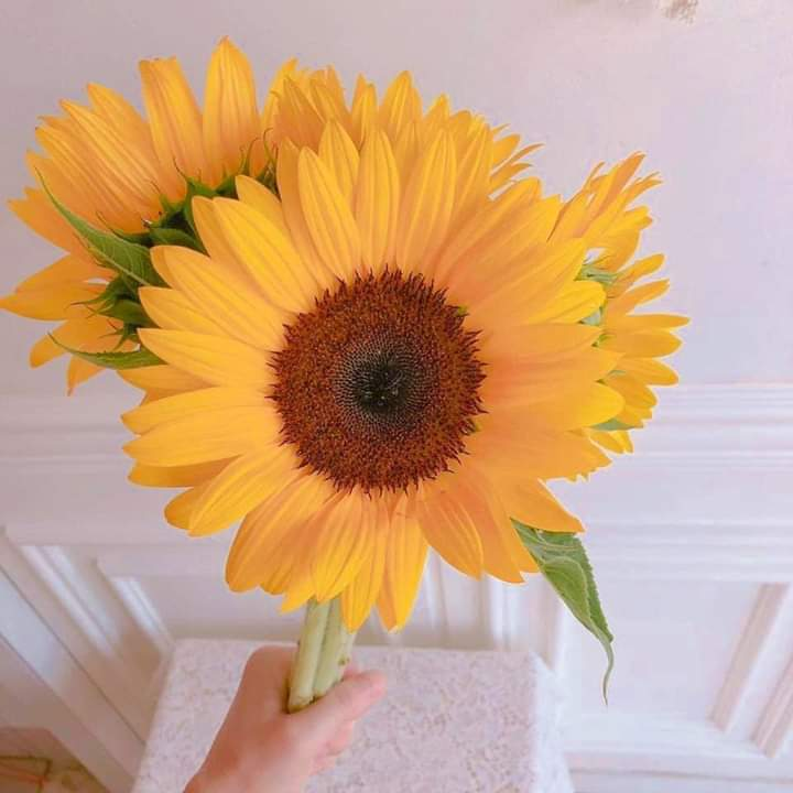 You're the sunflower I think your love would be too much Or you'll be left in the dust Unless I stuck by ya You're the sunflower You're the sunflower  Goodnight everyone <br>http://pic.twitter.com/CNVCoaveKz