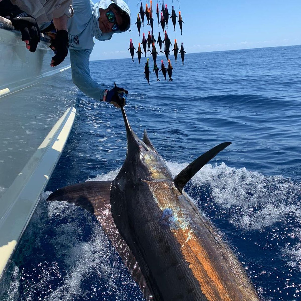 Los Suenos, CR - Geaux Fly released a Blue Marlin and 2 Sailfish.