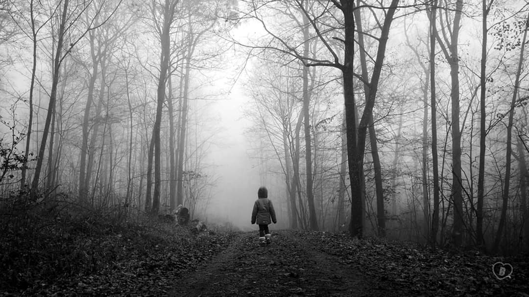 IN THE FORREST #winter #walk #trees #forrest #forest #wald #nebel #fog #january #winter #cold #mysterious #landscape #Landschaft #love #blackandwhite #schwarzweiss #Photographie #photographypic.twitter.com/jEgPNK1pHx
