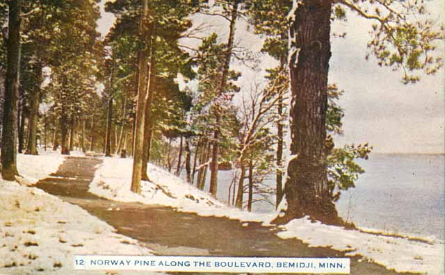 #OTD 1953: Gov. Clyde Elmer Anderson signs a bill establishing the red pine, commonly known as the Norway pine, as Minnesota's official state tree. This tinted postcard of Norway pines in Bemidji dates to circa 1912. <br>http://pic.twitter.com/FImZjqs6p2