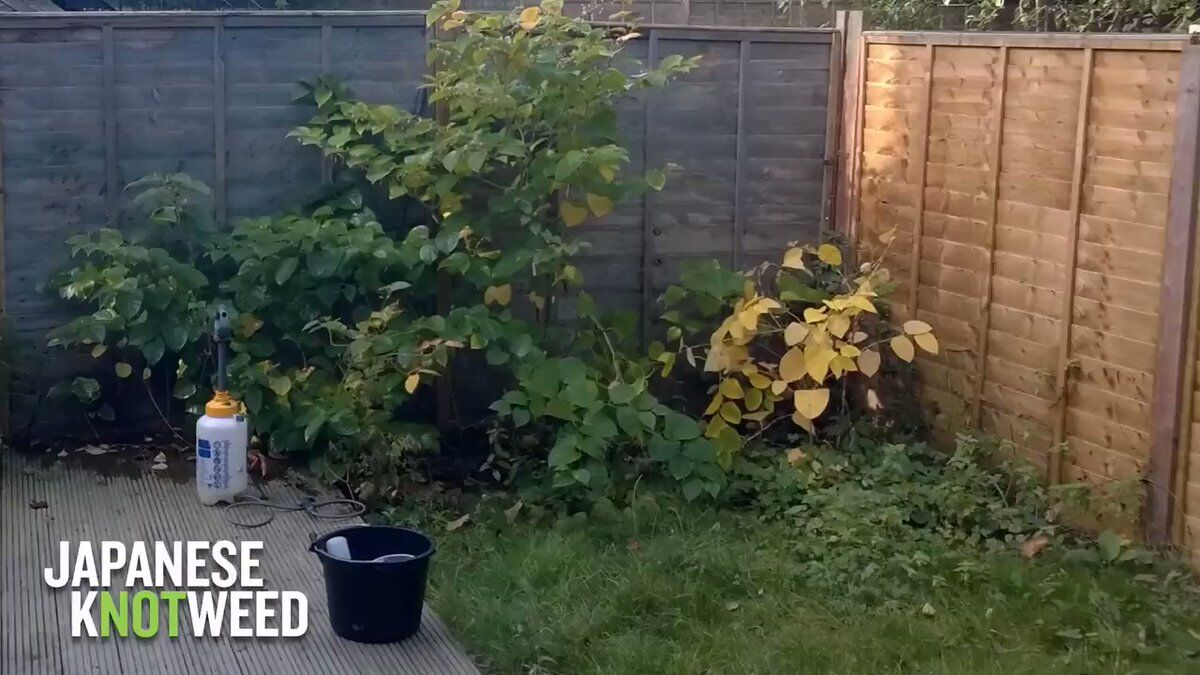 This clip shows the effectiveness of our Japanese knotweed #herbicide #treatment. If you own or manage #Property or land affected by #knotweed, visit our website and find out how to arrange a FREE survey: http://bit.ly/2UlifUh #TuesdayThoughts #TuesdayMotivation #constructionuk pic.twitter.com/NtFqoWgsfe