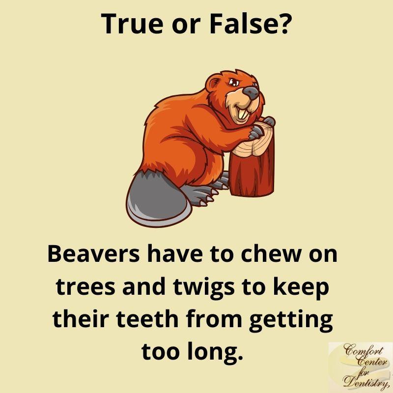They do have long #teeth as it is.. #TrueorFalse? pic.twitter.com/7v0HEaLyKj