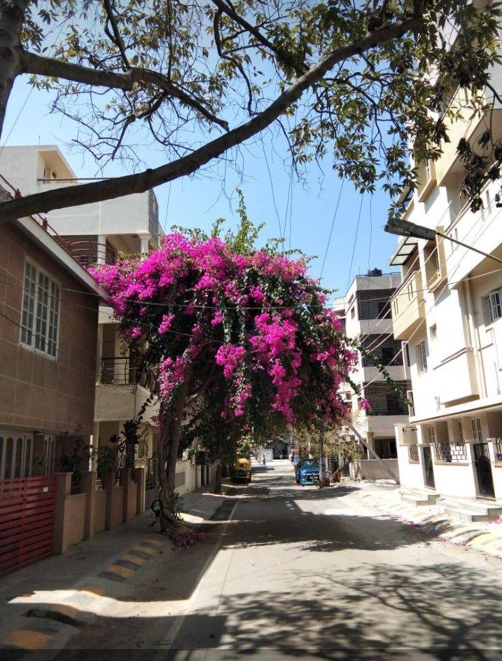 Chengalpet la ipadi oru place irukunu sonna chengalpet makkalae namba matanga  #ezhaigalin_kodaikanal #cpt #cglpic.twitter.com/8mqPFrpkLE