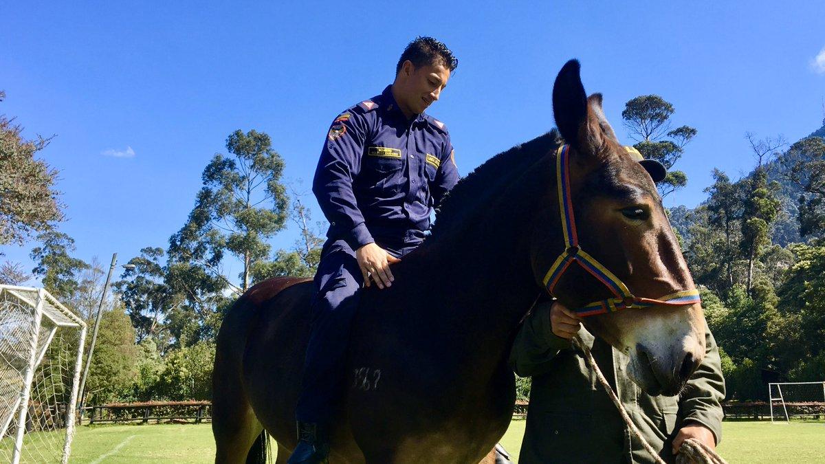 #AEstaHora con @CarabinerosCol realizamos una práctica de manejo y uso de equinos en la atención de emergencias, para el transporte de herramientas o equipos de salvamento 🚒 de esta forma articulamos conocimiento para la atención efectiva de incidentes en @Bogota 👨🏻🚒👮🏻♂️