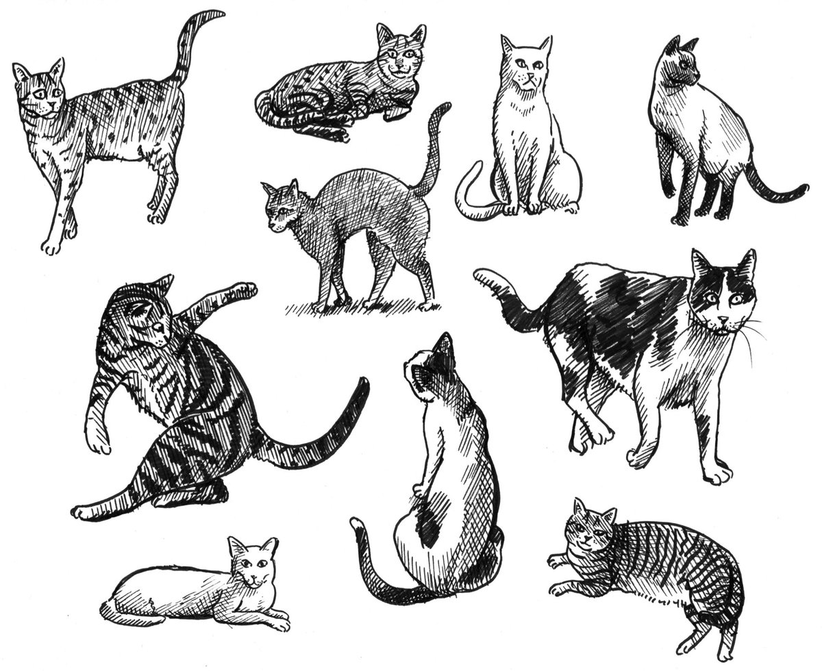 And more cats...