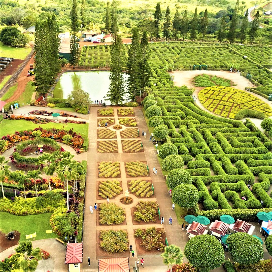 """Dole Plantation on Twitter: """"Which Dole Plantation adventure do you 💛  most: 🍍 Pineapple Maze 🌺 Plantation Garden 🚂 Pineapple Express Train  ride 🍦 Eating Dole Whip Enjoy them all (and save"""