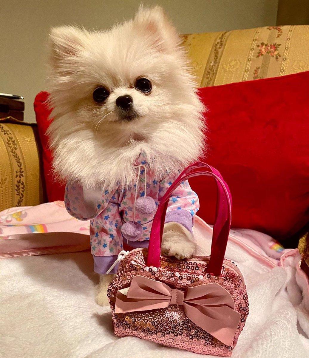 It's called fashion sweetie. Look it up!  (@bebecitathepom)  #fashion #dog #thedailypomeranianpic.twitter.com/KR2c7ALJiZ