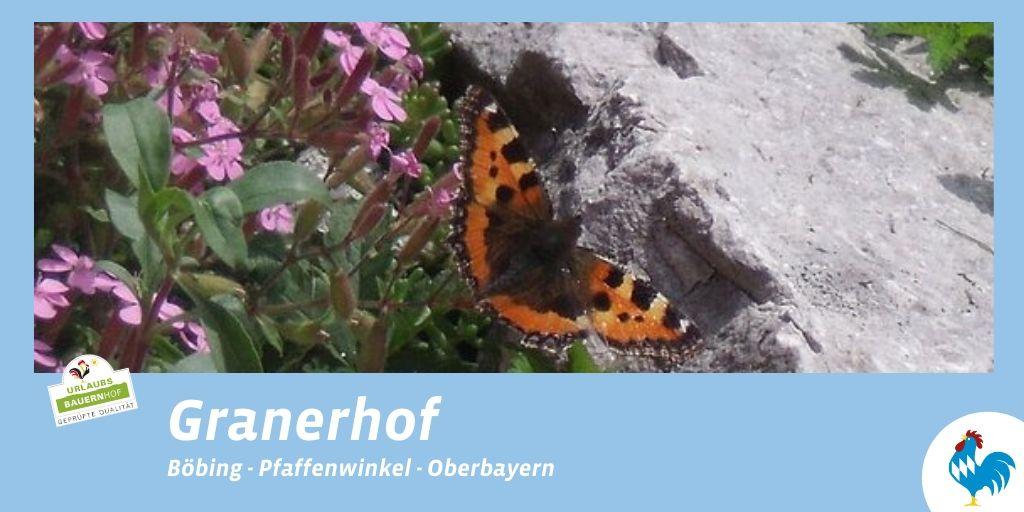 Lust auf Frühlingserwachen? Frühlingstage auf dem Granerhof erleben! Buchen unter https://scomp.ly/o8wDbN6  #bauernhofurlaub #fruehling #urlaubinbayern #deinbayern #oberbayern #visitbavaria #ferienaufdembauernhof #fruehlingserwachen #blauergockelpic.twitter.com/hGnH92uQPS