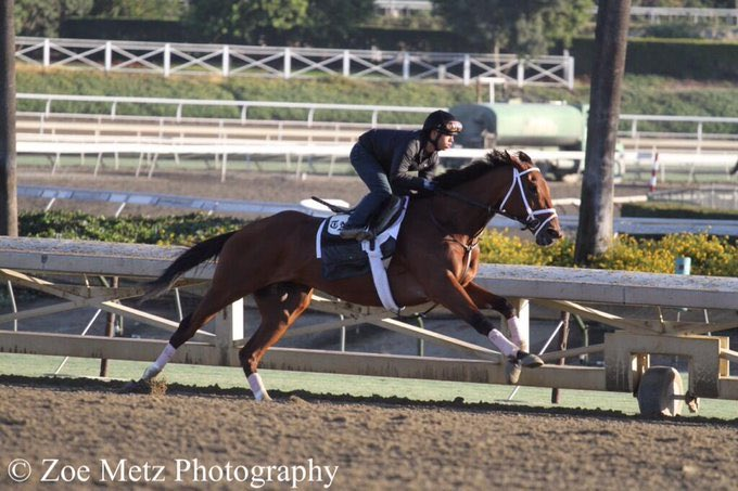 test Twitter Media - ELiTE mare buyers tune in. Charlatan is out of Authenticity. She was trained by @PletcherRacing for Padua. A 200k yrlg in 08', broke her Maiden going 8.5F at 3yo. Got hurt, won the G2 La Troienne at 5yo. Hit board in 3 G1's. @StonestreetFarm bought her for 1.2M (2013). Poetry. https://t.co/lNZH3rejVQ