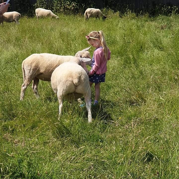 Sheep Ahoy Spring Open Days is Sunday 17th May from 12-4pm. Come along and enjoy the fun! #sanctuary #vegan #event pic.twitter.com/jWpurXqtE2