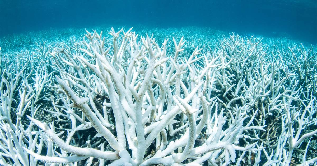 Earth's coral reefs could be gone by 2100, research finds. https://nbcnews.to/328u7e8