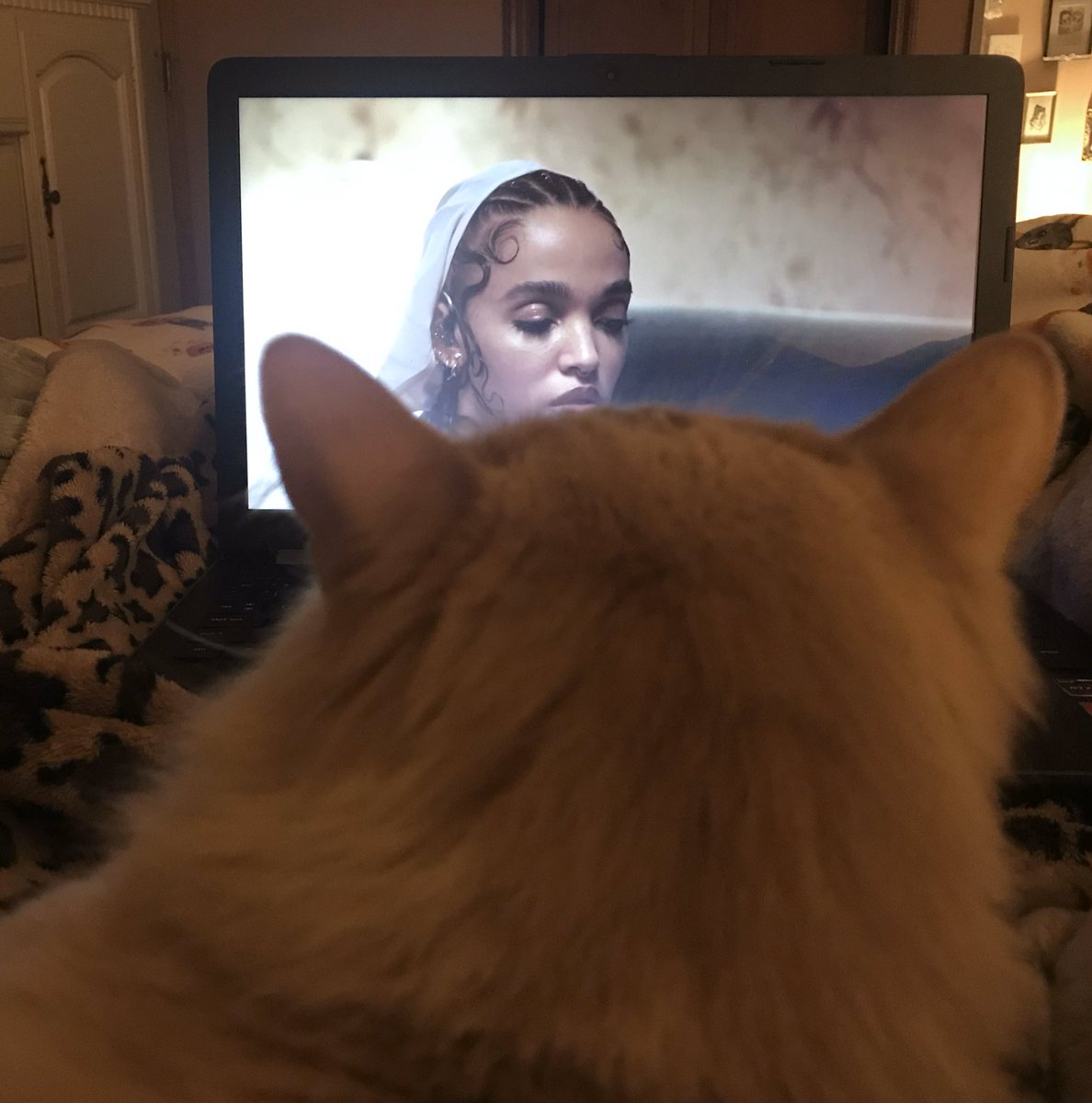 my cat admiring fka twigs