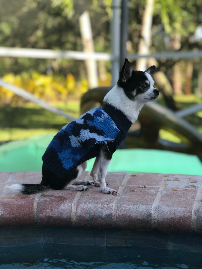 Sunshine is so attentive, she is like a lifeguard watching over the swimming pool.   Check at our site for more chill dogs at https://soo.nr/sPwo    #dogs #puppylove #dogoftheday #lovedogs #vitalpetlife #chihuahuasofinstagram #TongueOutTuesdaypic.twitter.com/HmmcoJZ8zN